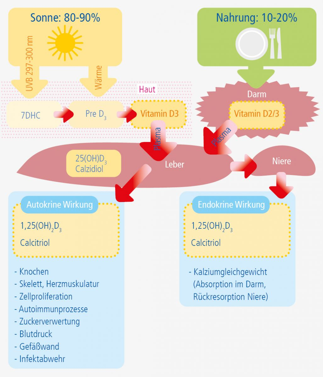 Grafik Vitamin D3